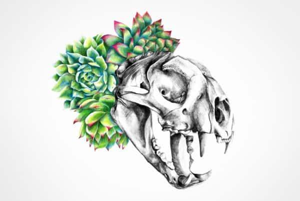 catskull illustration in pencil colour